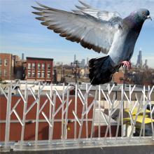 Amazon.com: Juego de púas para aves finas de ...