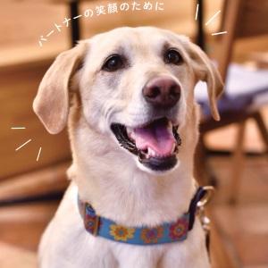 犬 ドッグマッサージ
