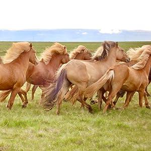 wild horses, summer sun, tory bilski, pegasus books