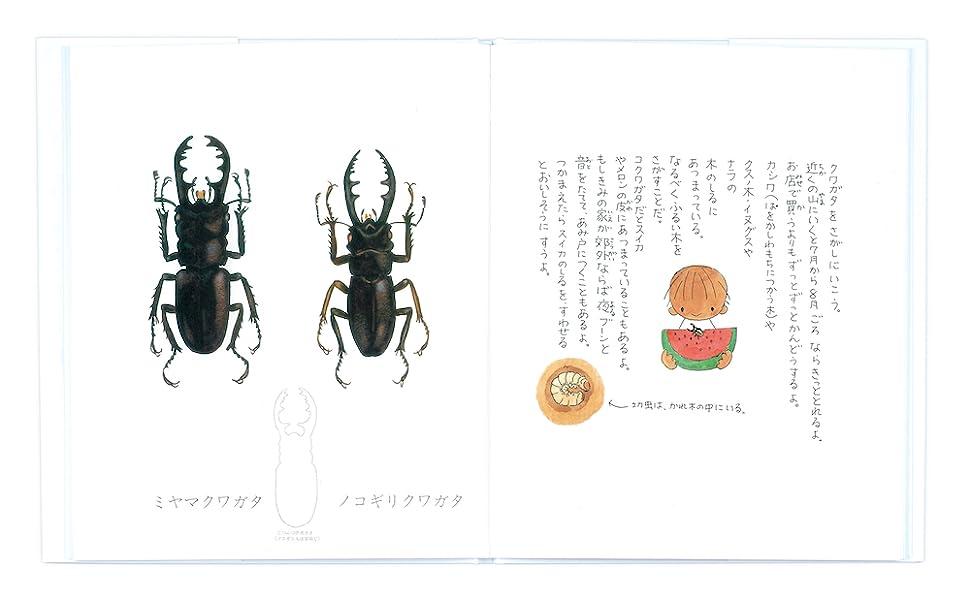 conch_mihiraki3