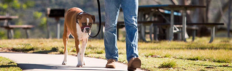 halti optifit no pull harness lead leash dog