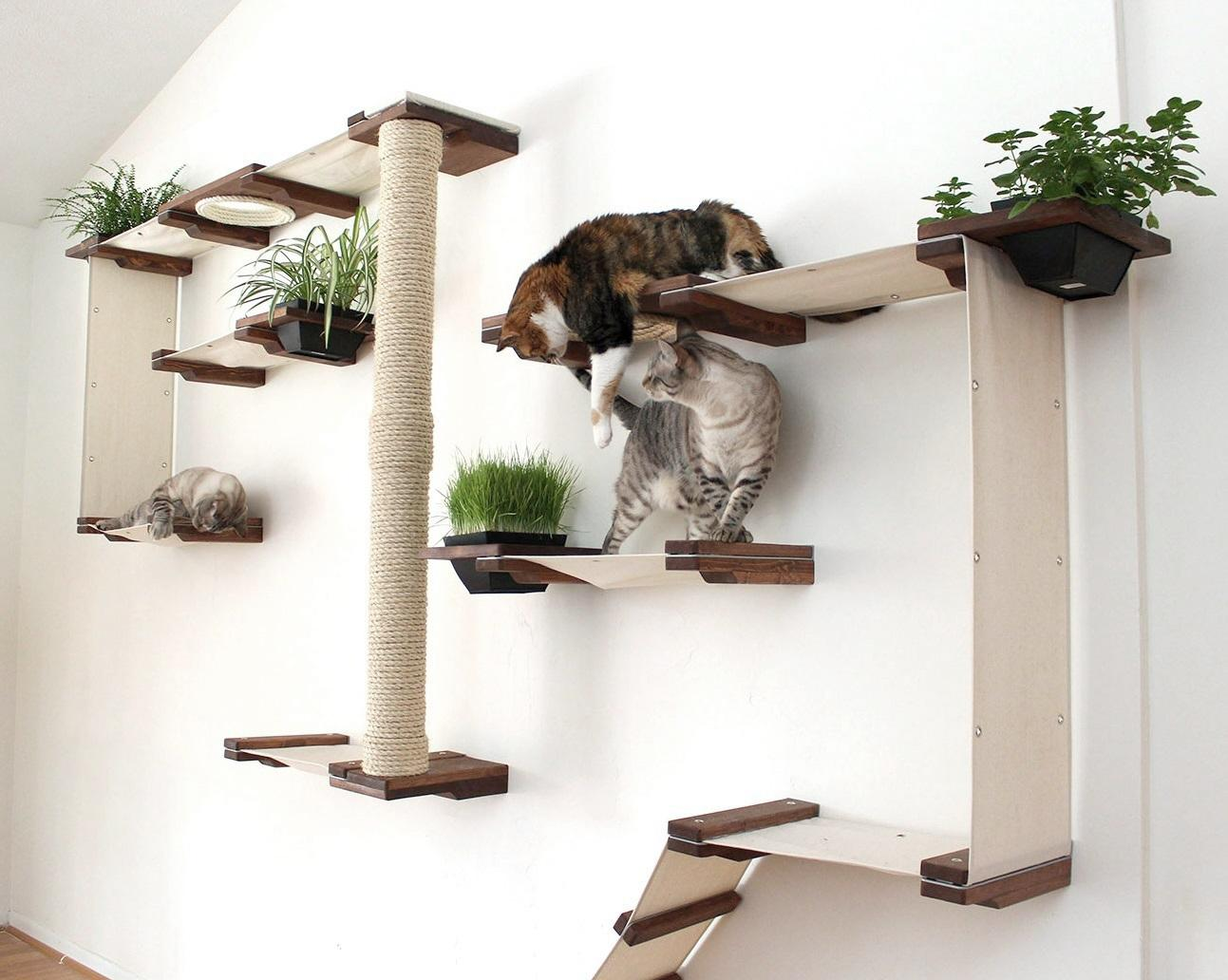 Amazon.com : CatastrophiCreations Cat Mod Garden Complex Handcrafted Wall Mounted Cat Tree