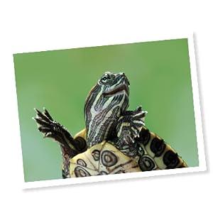 API brand story turtle