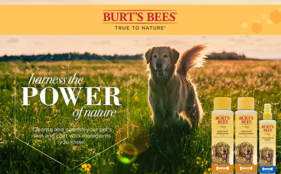 Burt's Bees Dog Shampoo Spray
