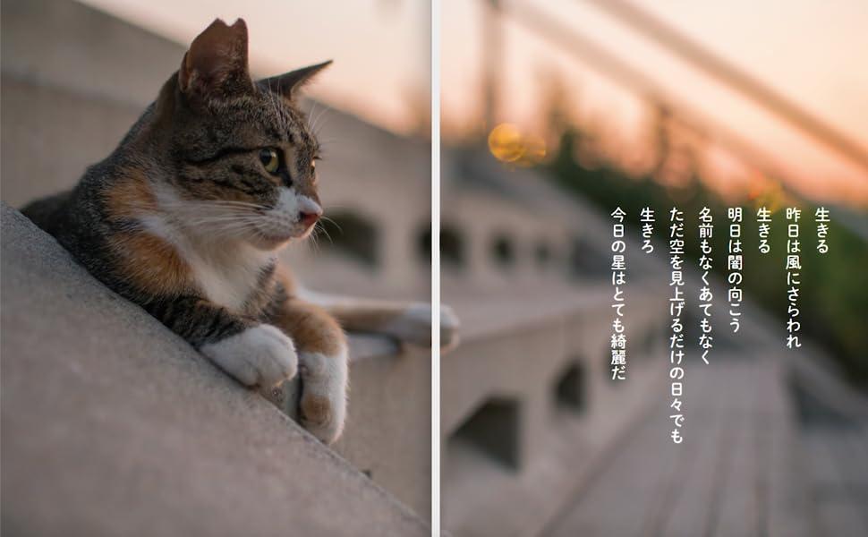 ネコ カメラマン db