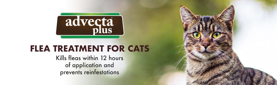 advecta, plus, cat, fleas, prevents