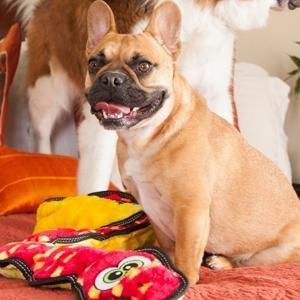 tough dog toys, durable dog toys, durable plush dog toys