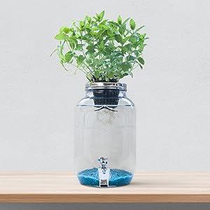 Blue Jar, Sistema de hidroponía Creativa: Amazon.es: Jardín