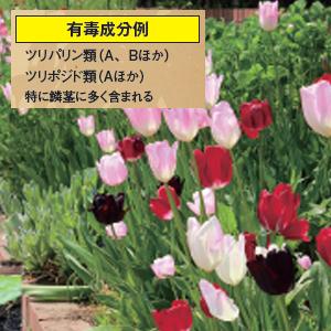 身近にある毒植物5
