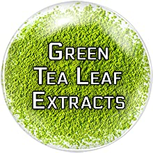 green tea extract weight management for women super egcg for weight loss for men boost thermogenesis