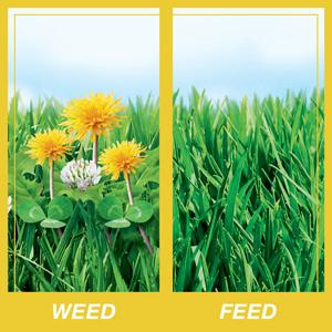 Weed & Feed