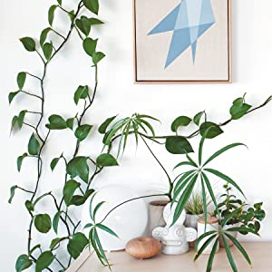houseplant book house plants book gifts for the gardener gardening books propagation gardening