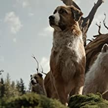 The call of the wild dog