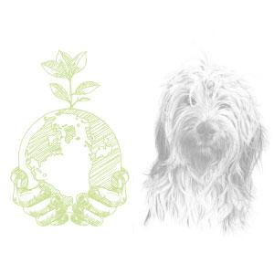 rispetto ambiente e animali