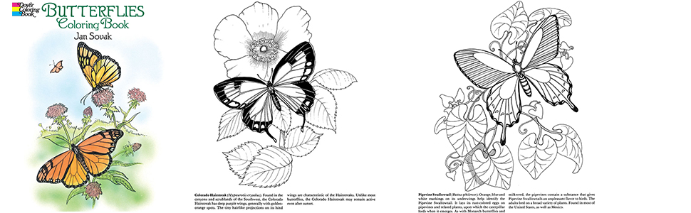 Painted Lady Butterfly coloring page | Free Printable Coloring Pages | 300x970