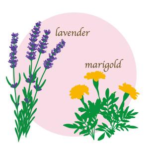 気持ちやすらぐラベンダー、マリーゴールドの香り