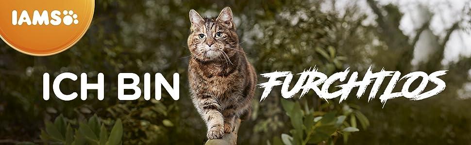 Iams Vitality, iams karma dla kotów, sucha karma dla kotów