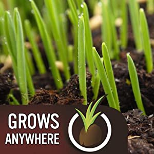 EverGreen Fast Grass Lawn Seed Grows Anywhere
