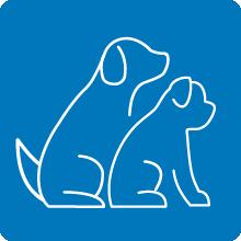 squirrel dog toy, hedgehog dog toys, indestructible dog toys for large dogs, rope dog toy