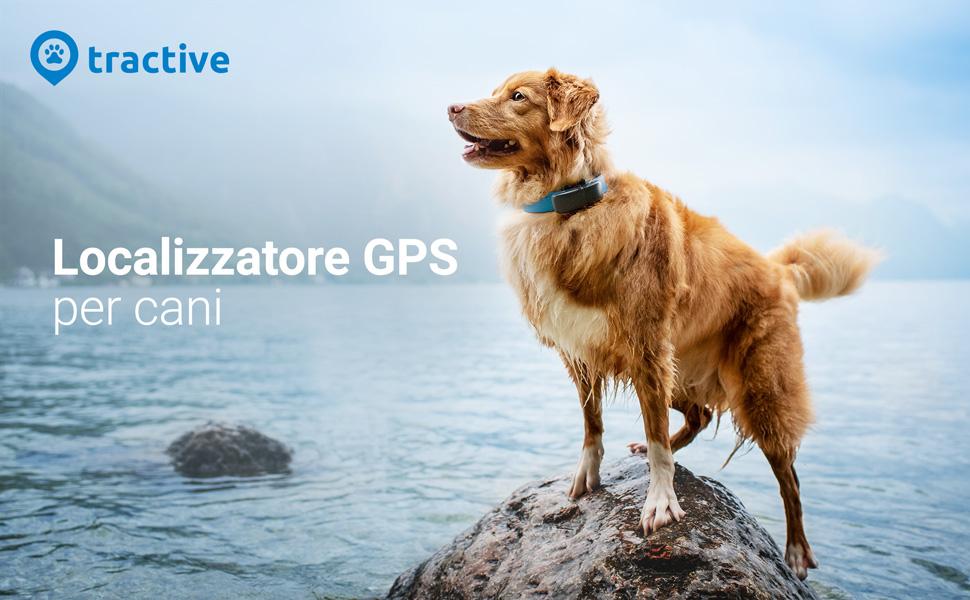 gps tracker dogs localizzatore per cani Dispositivo di localizzazione con Monitoraggio dell'Attività
