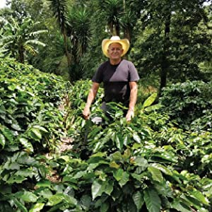 Pedro Fiallos, Honduras, coffee farmers, growing coffee, whole bean coffee, san francisco bay coffee