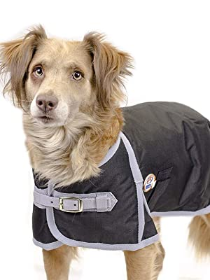 Winter dog coat jacket waterproof collie working dog supplies herding dogs