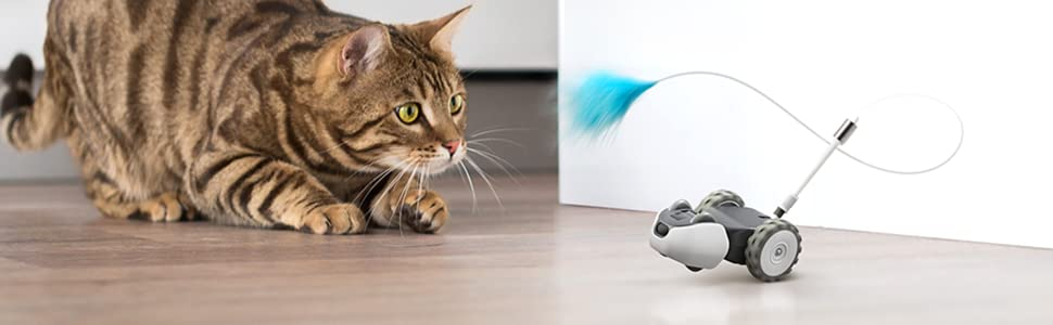mousr, cat, cat and mouse, robot mouse, cat toy, interactive cat toy, electronic cat toy, petronics
