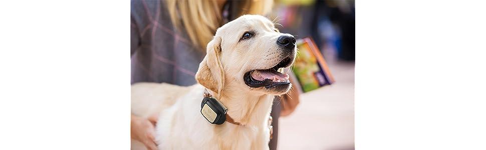 Localizador, perro, mascota, GPS