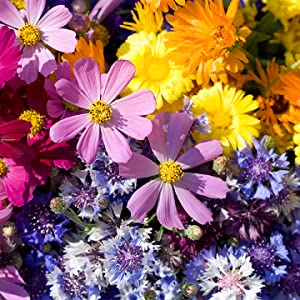 low grow wildflowers, x-pand, border flowers, sun & shade flowers, annuals, perennials