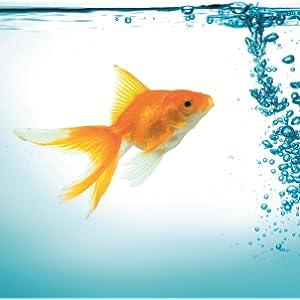 tetra goldfish fish food holiday food for all goldfish 2 x 12 g
