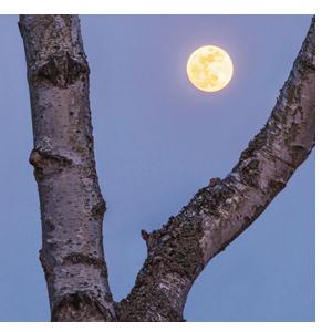 Mond Menschen Natur Landschaft Tiere