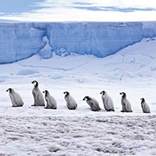 北極スマイル・南極スマイル カレンダー 2020 6月