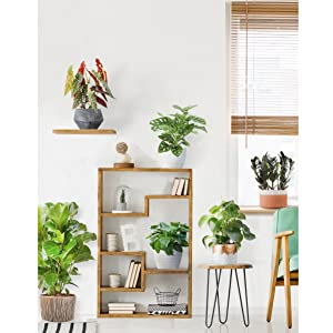 Trending Tropicals Houseplants
