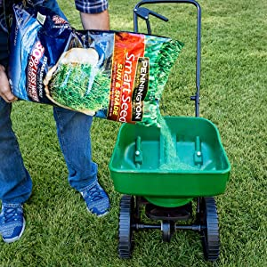 grass seed for lawn