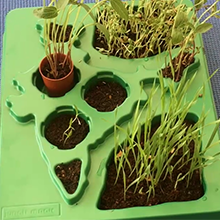 Botany Game for kids
