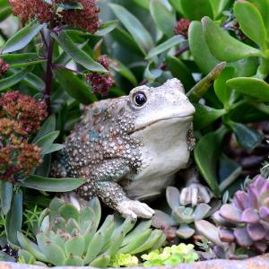 garden statue yard decoration outdoor cat big turtle flower outside spring ceramic gardening metal