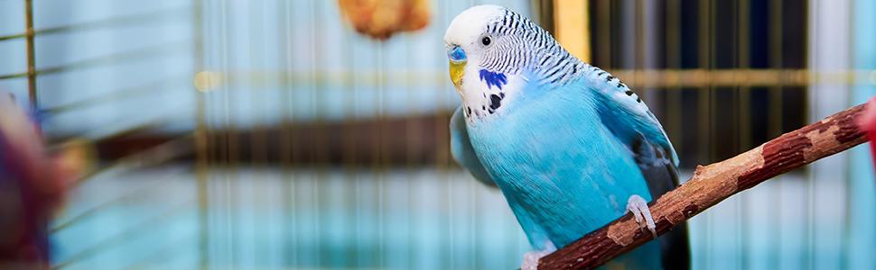 Relaxdays - Jaula para pájaros (tamaño XL, con Ruedas, para periquitos, Canarios, 2 Barras, 180 x 80 x 50 cm), Color Gris Claro: Amazon.es: Jardín