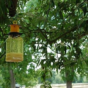 fly trap, fly catcher, fly killer, stop flies, kill flies, the buzz, garden fly trap