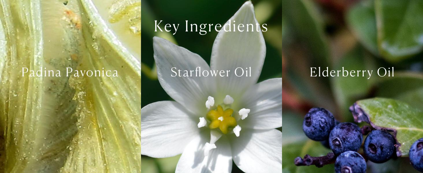 Pro-Collagen Cleansing Balm Key Ingredients