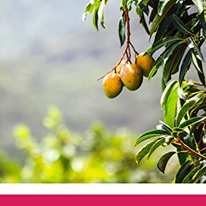 raspberry ketones, acia, cayenne, green tea, african mango seed, detox, antioxidant, metabolism