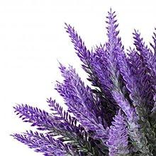lavender for the skin, lavender
