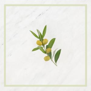 Extrait d'huile d'Olive bio / Extrait de Basilic bio