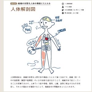 俯瞰のメソッド:人体解剖図