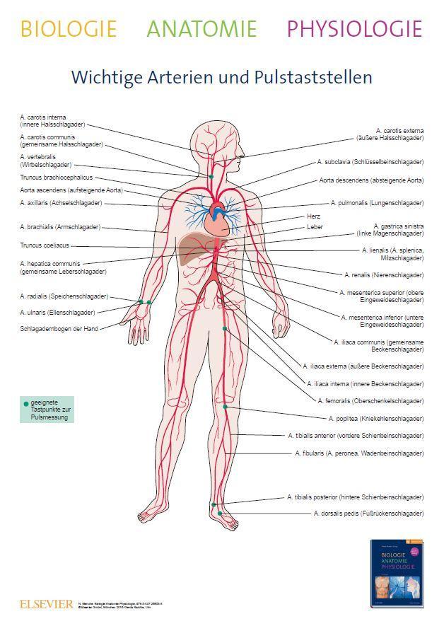 Biologie Anatomie Physiologie: mit Zugang zu pflegeheute.de: Amazon ...