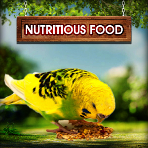 bird healthy food