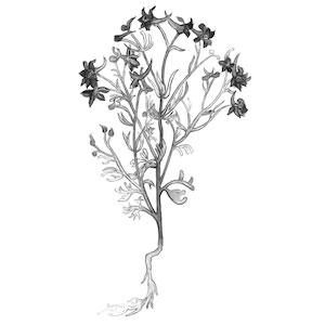 Jewish herbalism, herbalism books, herbalism, herbalist, Jewish herbalism, herbal tradition