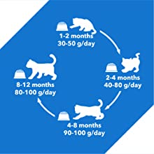 HOW MUCH KITTEN DRY FOOD FOR YOUR KITTEN?