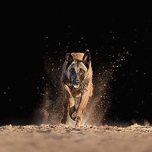 Alimento seco para perros adultos, altas dosis de energía, para todas las razas
