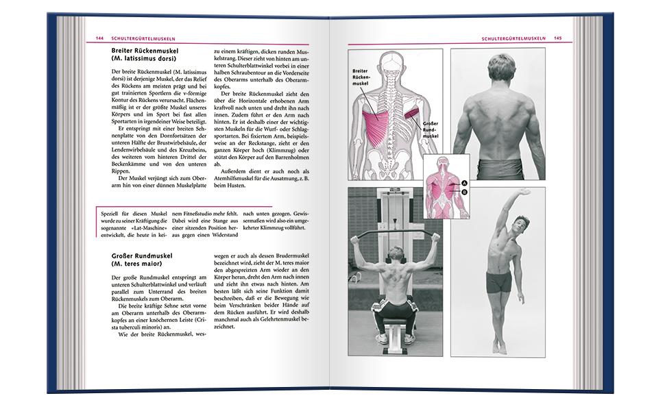 Schultergürtelmuskeln
