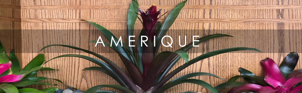 AMERIQUE BRINGS ENDLESS ELEGANCE TO YOUR HOME
